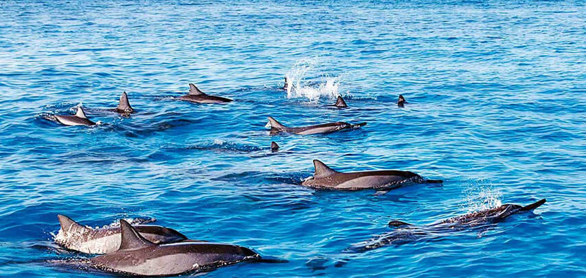 Catamaran cruise with the Dolphins.
